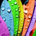 Sử dụng màu sắc hiệu quả trong tiếp thị
